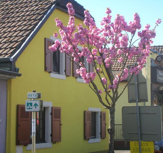 Haus im Elsass