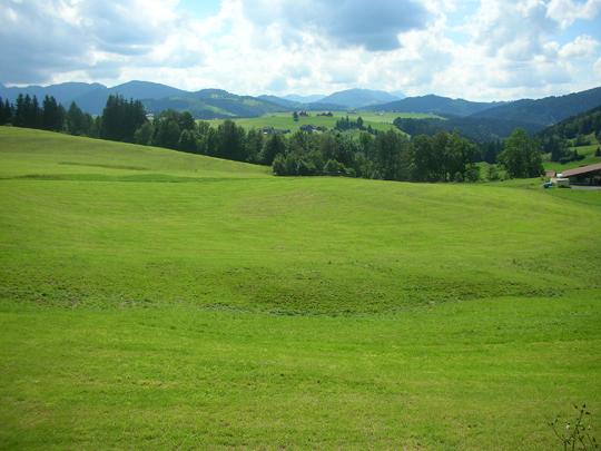 ... und das betörende Grün Schweizer Wiesen auf unserer Wanderung