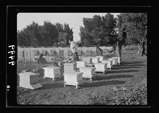 Bienenstöcke der US-Kolonie in Bethlehem, Israel (courtesy by Library of Congress, Wash. D. C.)