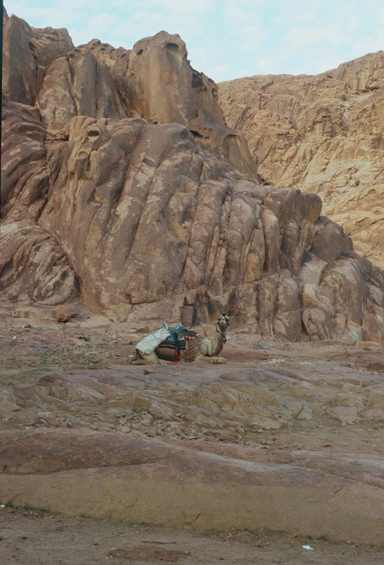 Szene mit Kamel (Suchbild)